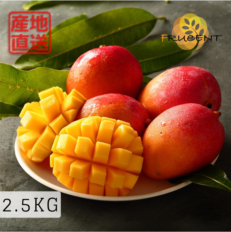 台灣愛文芒果|愛文マンゴー|台湾マンゴー|IRWIN MANGO|2.5㎏( 約4~7玉 ))|予約販売中