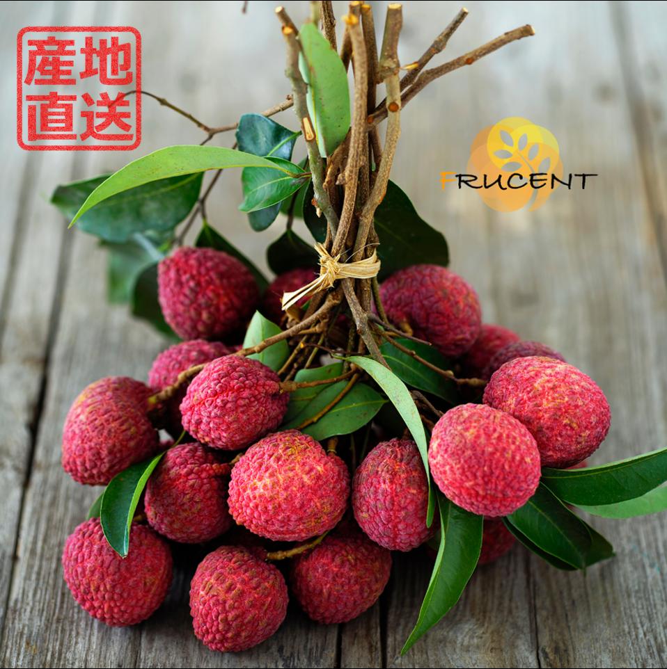 台灣黒葉ライチ|黒葉ライチ|台湾ライチ|LYCHEE|2.5kg|予約販売中